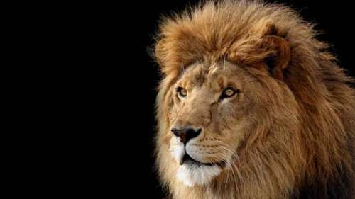 Mac OS X Lion Wallpapers HD Freakify 2013 (28)