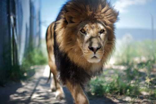 Mac OS X Lion Wallpapers HD Freakify 2013 (9)