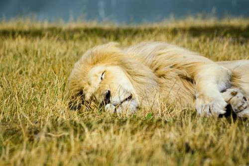 Mac OS X Lion Wallpapers HD Freakify 2013 (19)