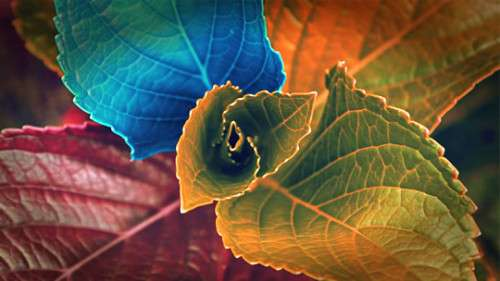 Colored Leaves 500x281 image