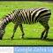 Google Zebra Update