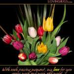 2013 Valentine Day Wallpapers HD quotes (43)