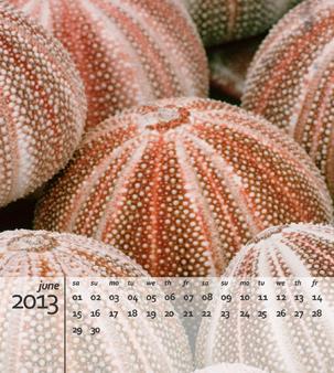 A freebie 2013 calendar template for your photos