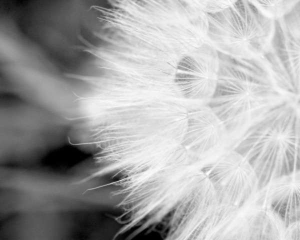 Black and white Photography 19