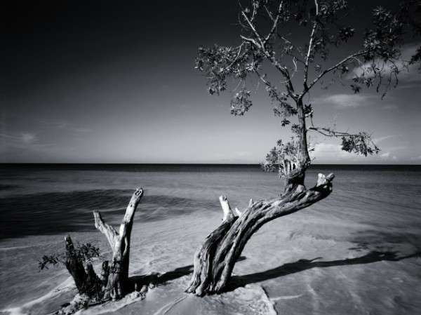 Black and white Photography 5