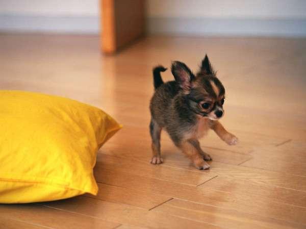 Cute Dog Photography (10)
