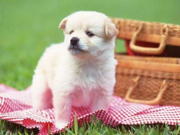 Cute Dog Photography (12)