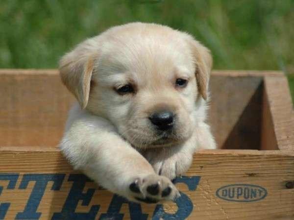 Cute Dog Photography (13)
