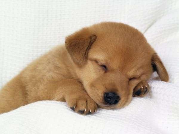 Cute Dog Photography (15)
