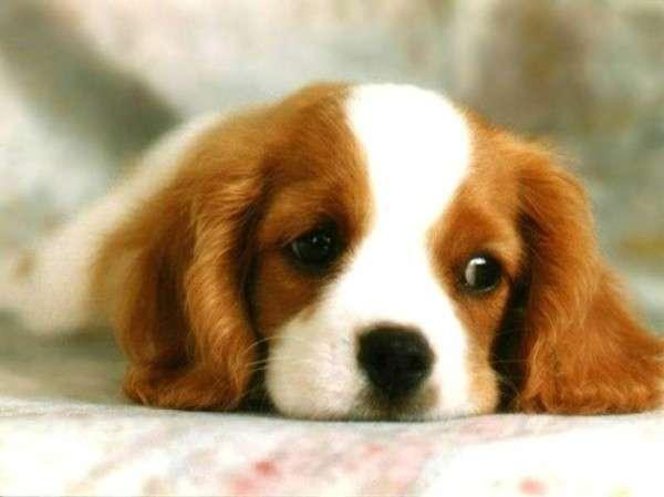 Cute Dog Photography (16)