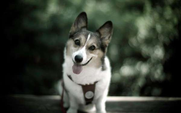 Cute Dog Photography (17)