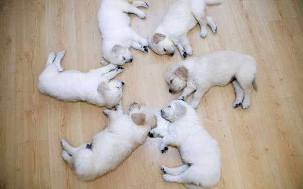 Cute Dog Photography (19)