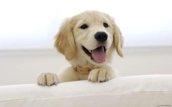 Cute Dog Photography (2)