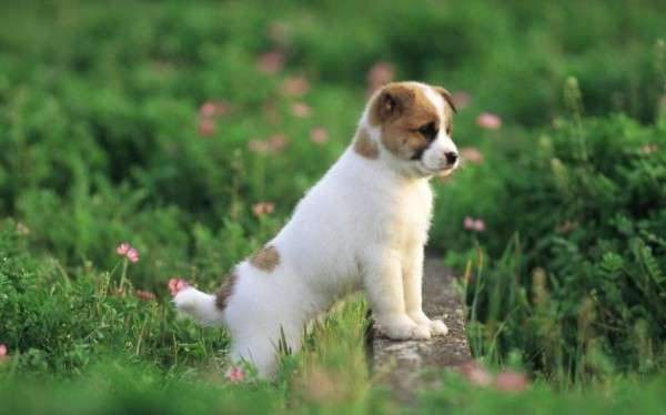 Cute Dog Photography (20)
