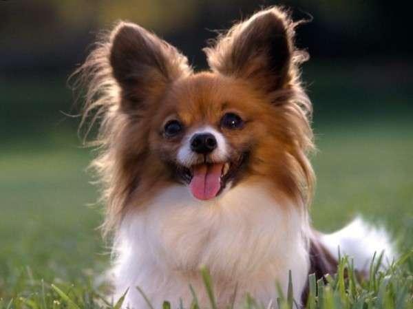 Cute Dog Photography (22)