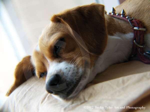 Cute Dog Photography (23)
