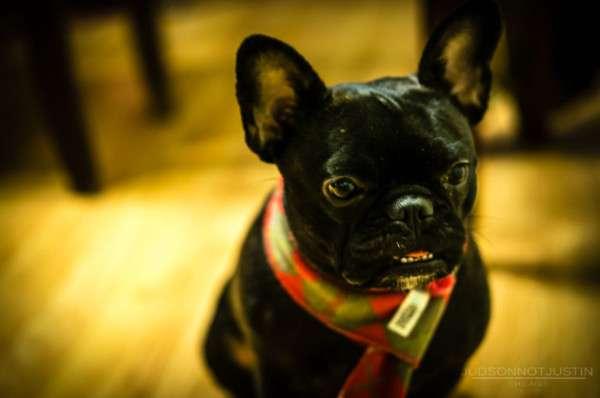 Cute Dog Photography (24)