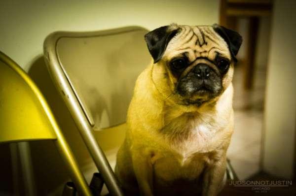 Cute Dog Photography (25)