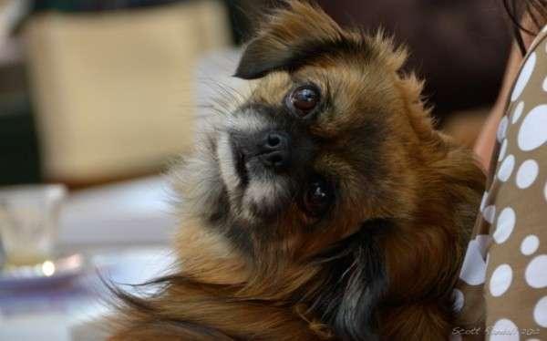 Cute Dog Photography (26)