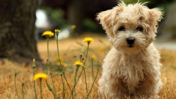 Cute Dog Photography (27)