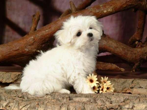 Cute Dog Photography (28)