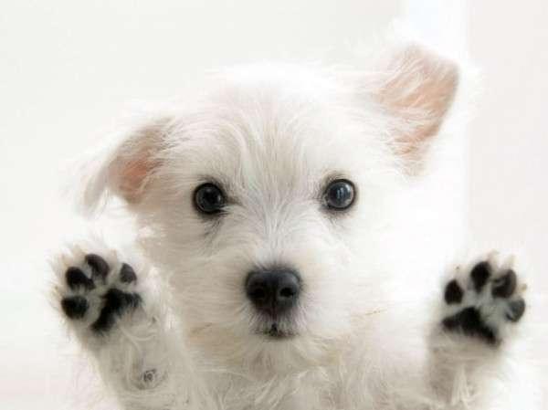 Cute Dog Photography (29)