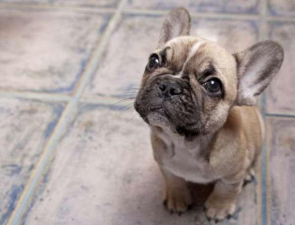 Cute Dog Photography (3)