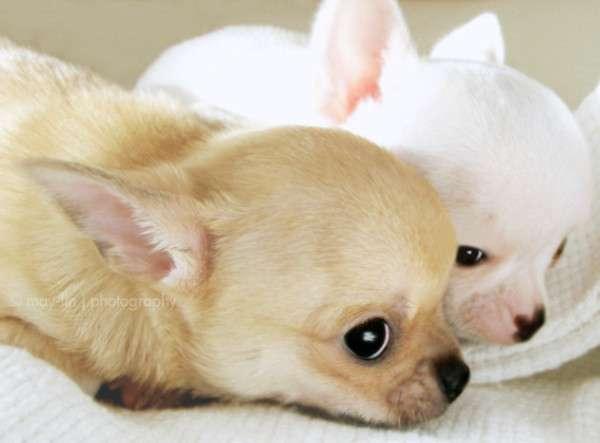 Cute Dog Photography (31)
