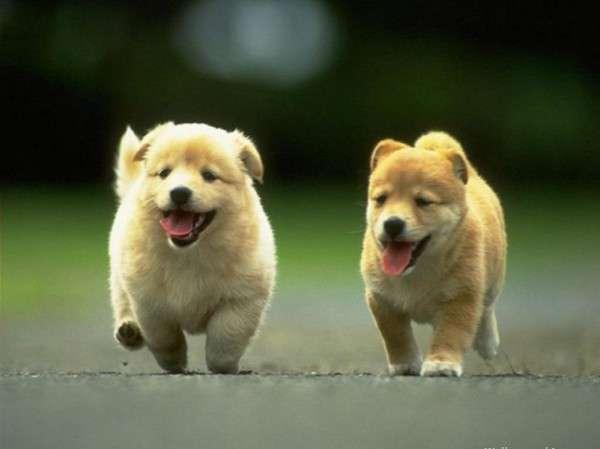Cute Dog Photography (4)