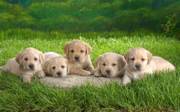 Cute Dog Photography (5)