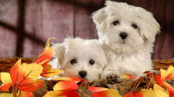Cute Dog Photography (6)