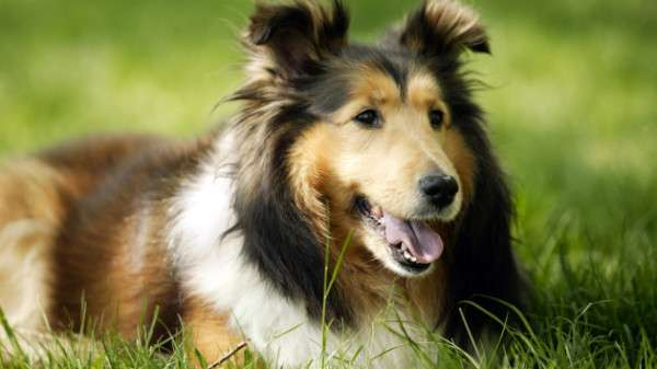 Cute Dog Photography (7)