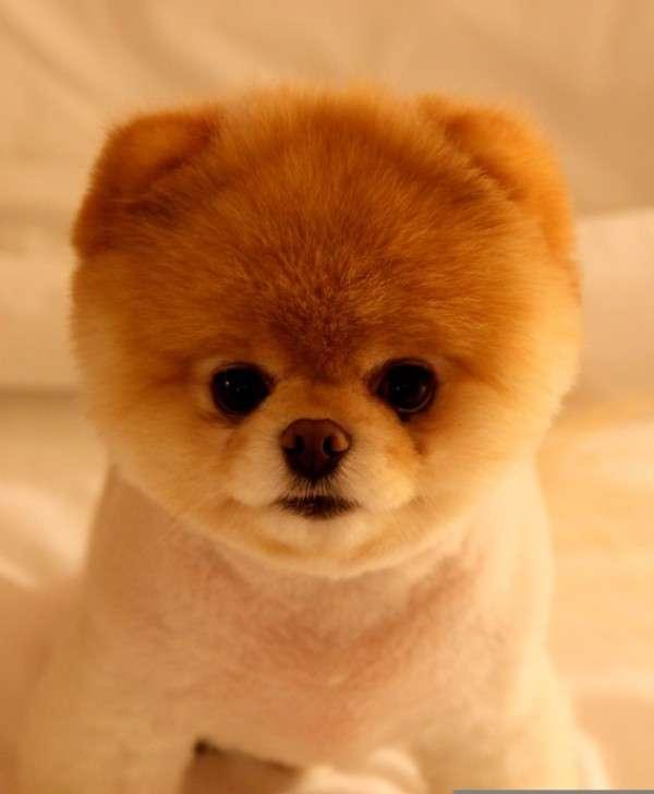 Cute Dog Photography (9)