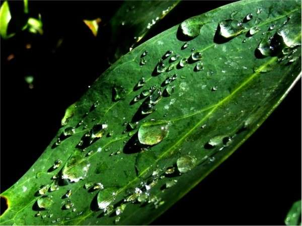 Dew Drop Photography 10
