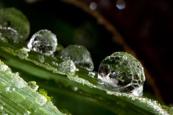 Dew Drop Photography 12
