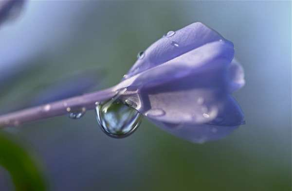 Dew Drop Photography 16