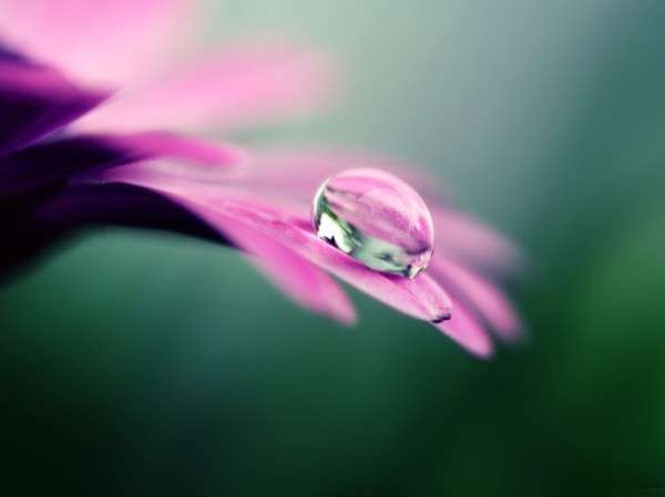 Dew Drop Photography 17