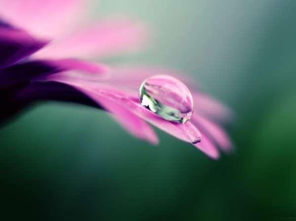 Dew Drop Photography 17