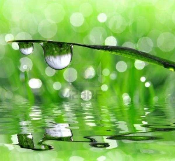 Dew Drop Photography 18
