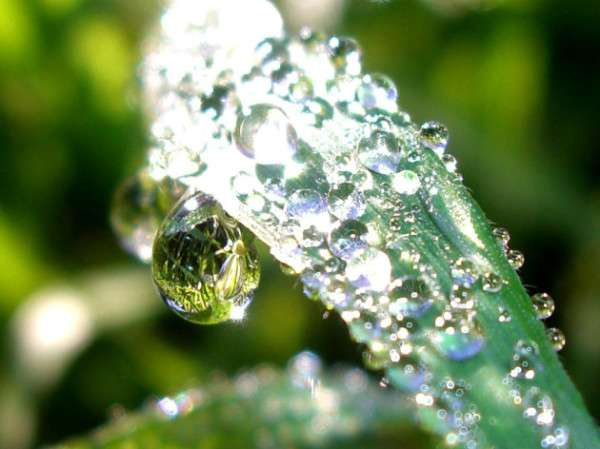 Dewdrops on grass reflecting the world