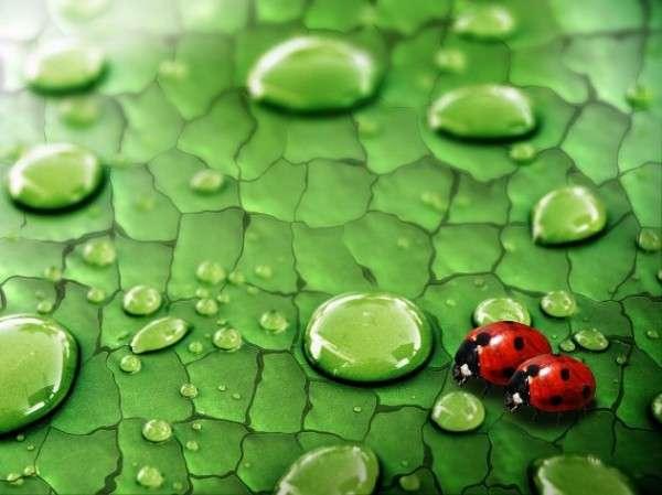 Dew Drop Photography 2