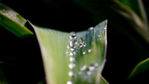 Dew Drop Photography 23