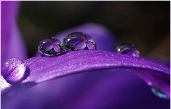Dew Drop Photography 24