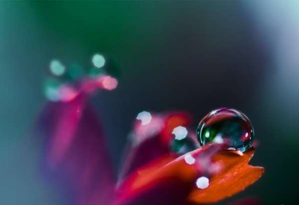 Dew Drop Photography 26