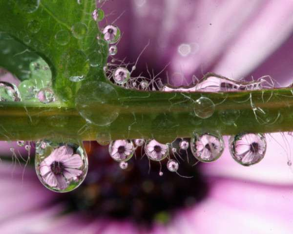 Dew Drop Photography 27