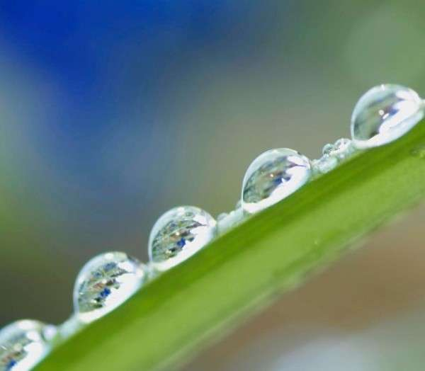 Dew Drop Photography 3