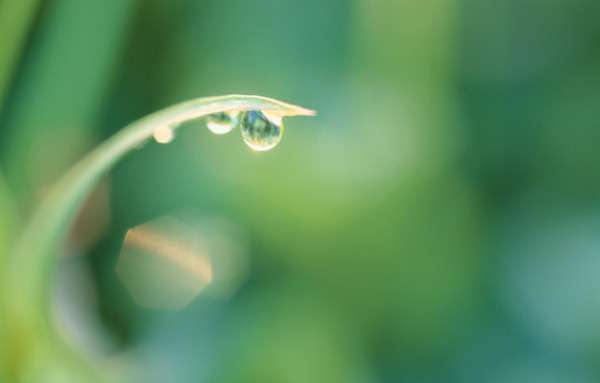 Dew Drop Photography 4