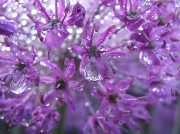 Dew Drop Photography 5