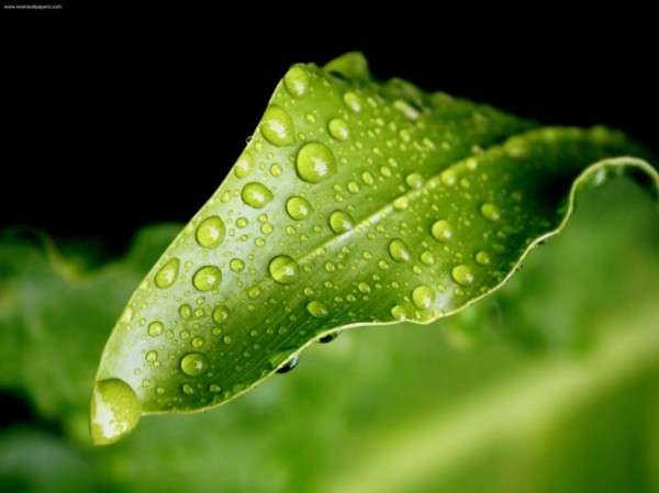 Dew Drop Photography 6