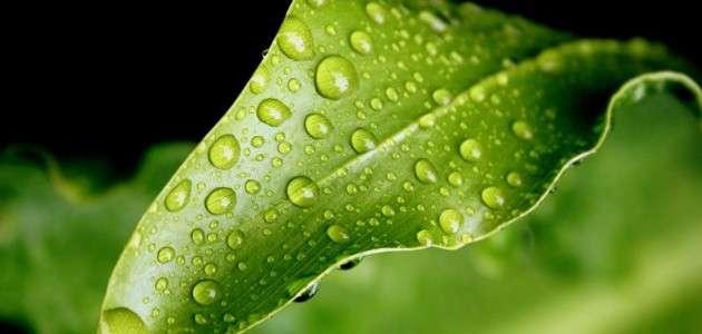 Dew Drop Photography 6
